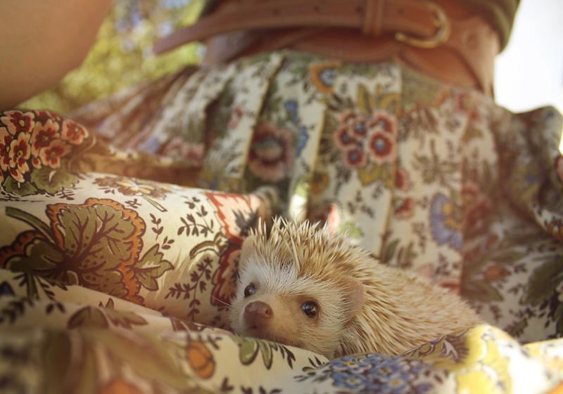 hogwarts, the hedgehog 4 by t-y-l-e-r