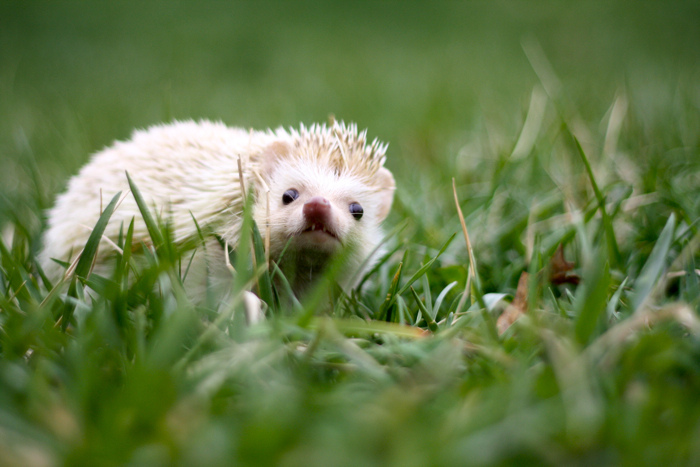 Hogwarts, the Hedgehog 8 by t-y-l-e-r
