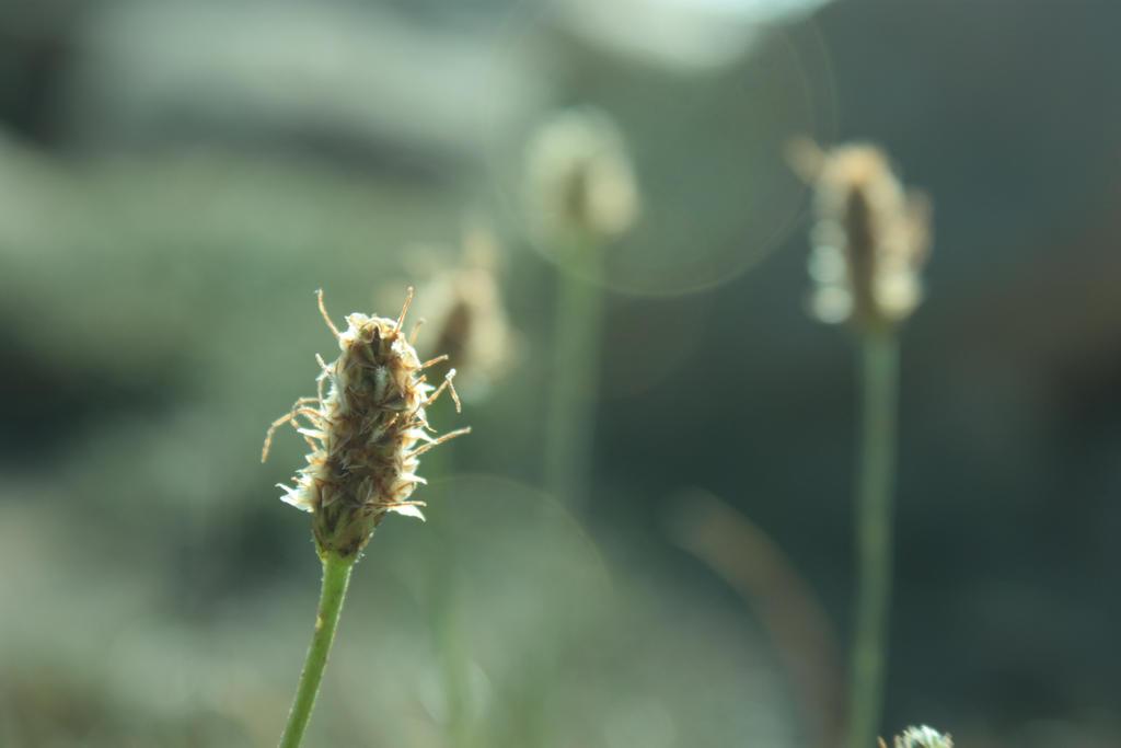 Sunny herb