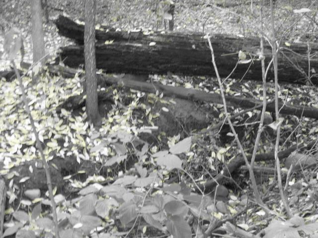 fallen log by JFuchs