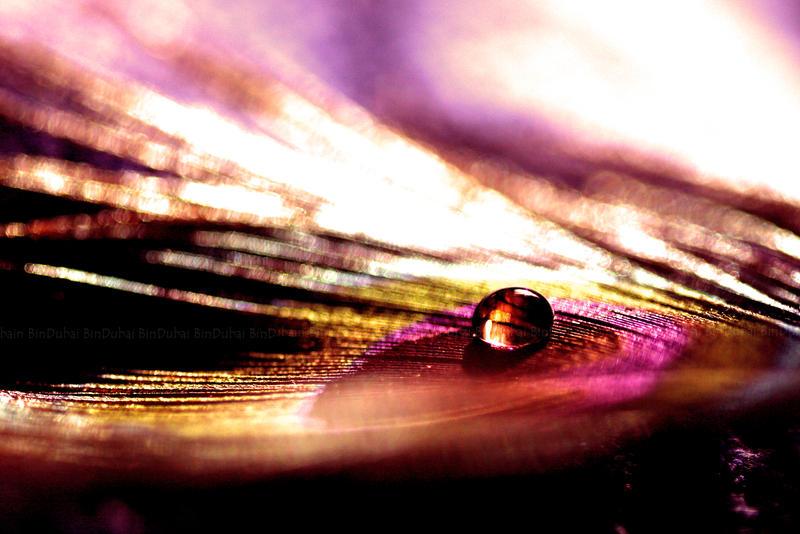 Dropso by BinDubai