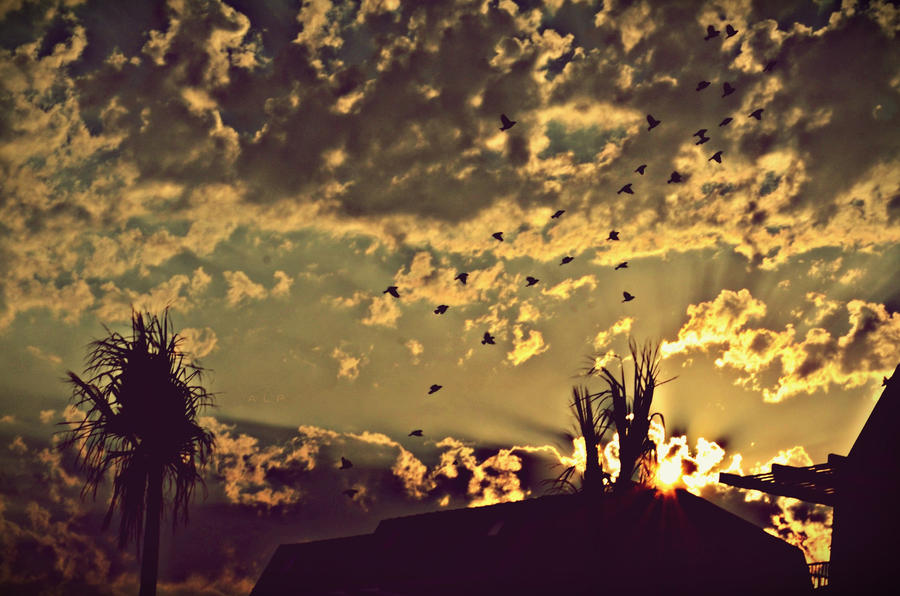 the birds and the sun farewells time by abzegh