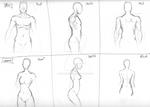 Human Anatomy: Torso Study 2