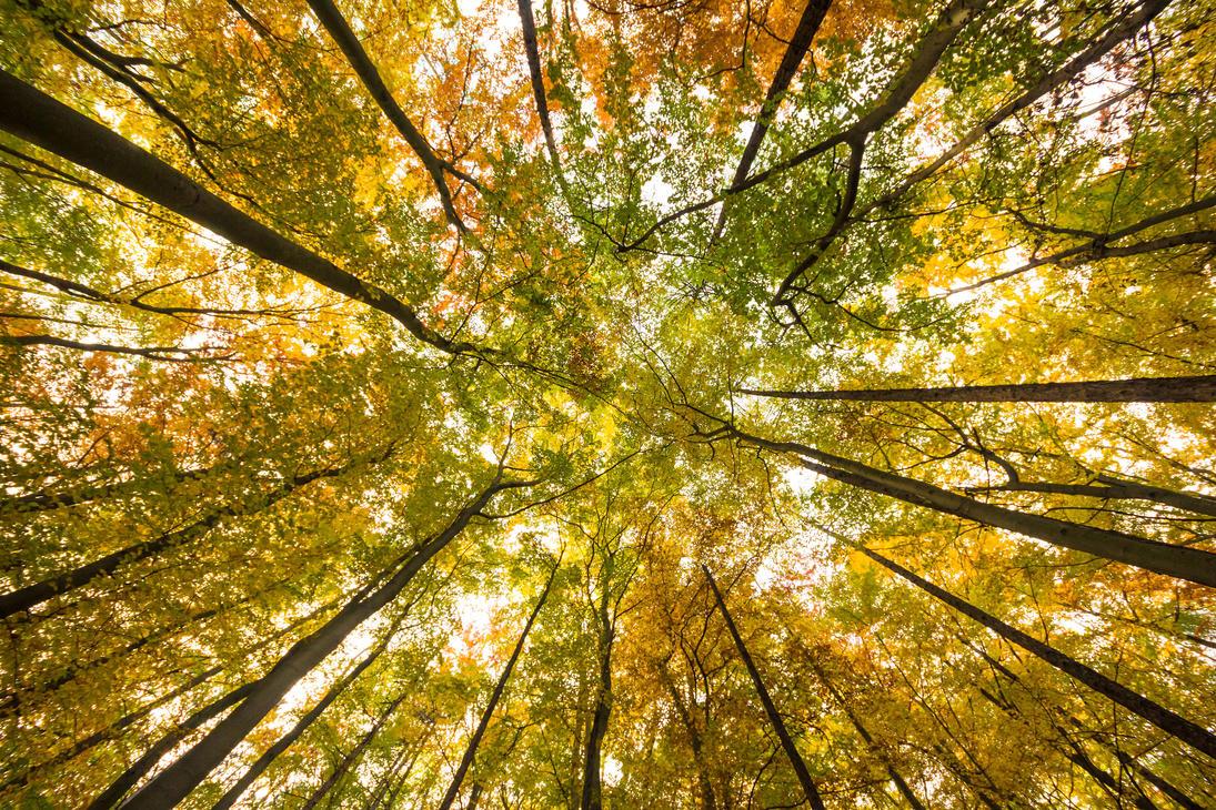 reach for the fall by kopfwiesieb
