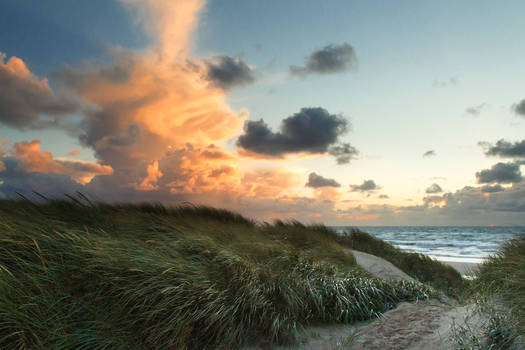 in the dunes at sunset