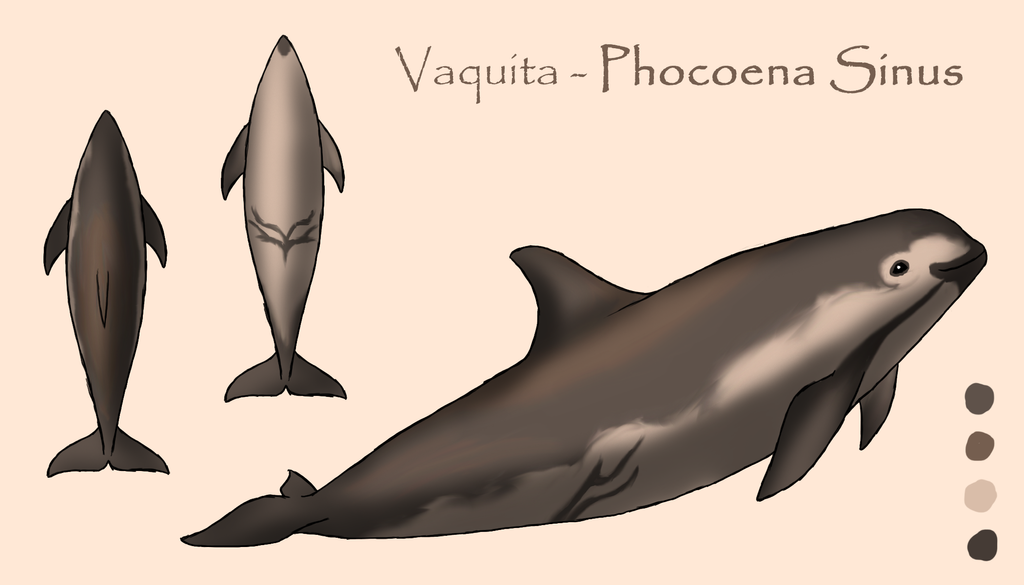 Vaquita - Ref Sheet by Morgan-Michele