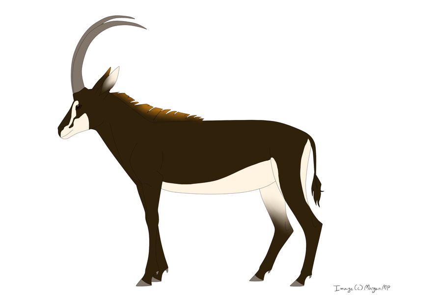 Sable Antelope by Morgan-Michele on DeviantArt