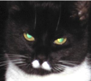 Diimus's Profile Picture
