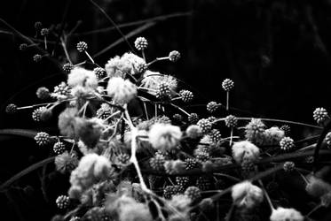 Spring by MrJackXIII