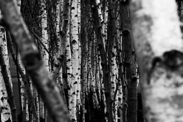 Urban Forest by MrJackXIII