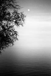Lonely tree by MrJackXIII