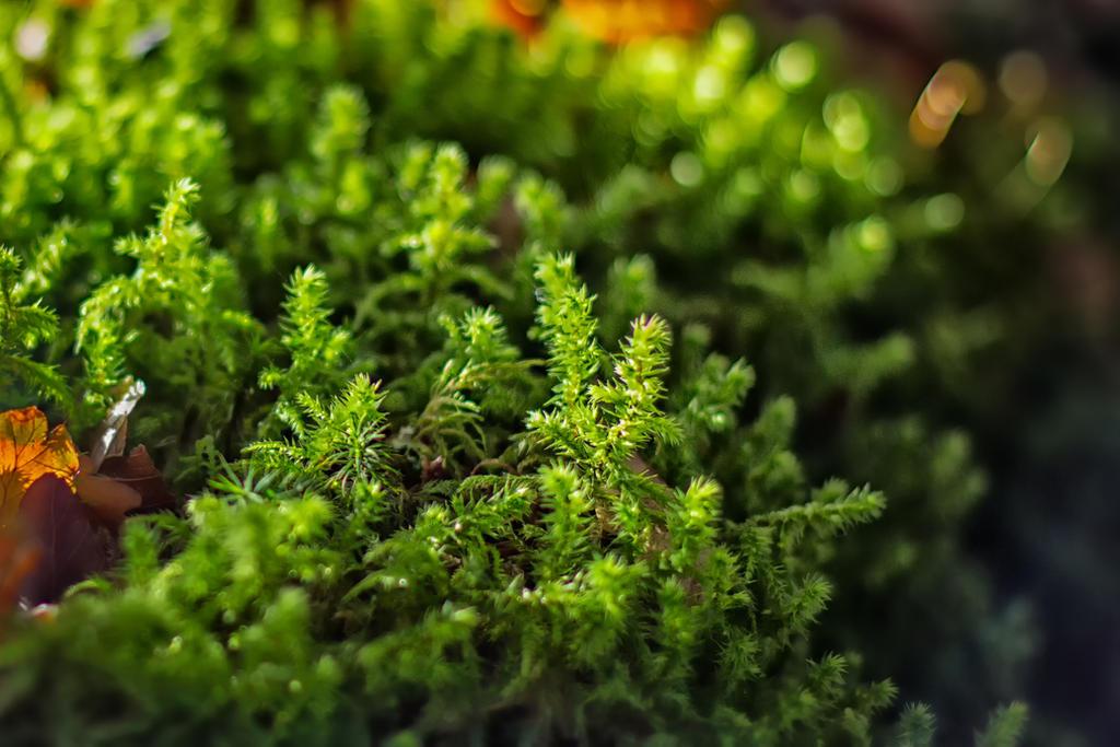 Moss by Wanowicz