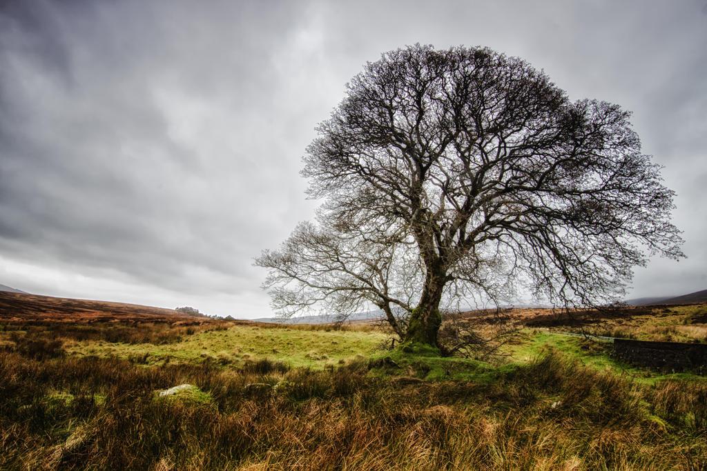 Lonely tree by Wanowicz