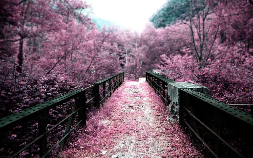 Nature Sakura Flowers Wallpaper HD By DorcarTheWarrior
