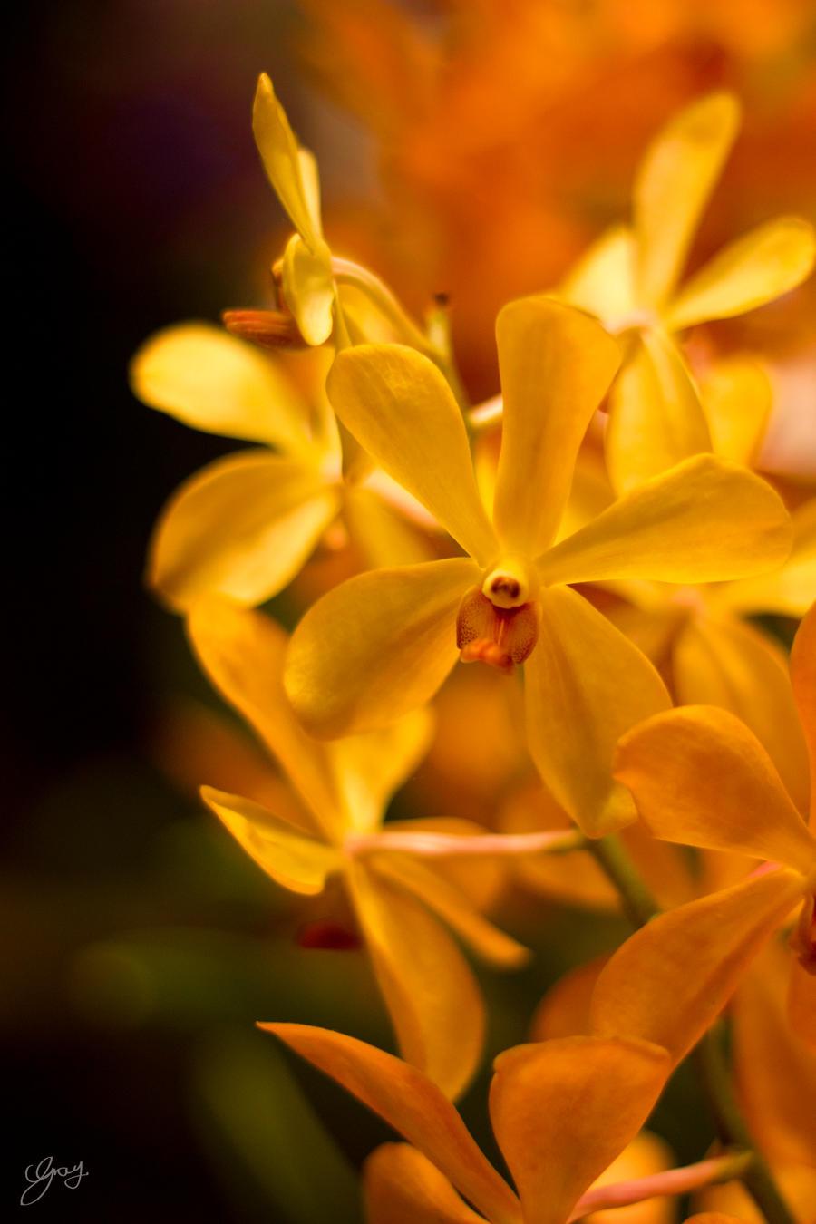 Sunny Flower by SaqqaraBird