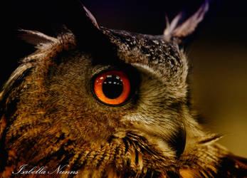 Those Eyes by Nightwarrier