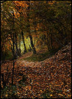 Path in the woods by VesnaRa014