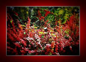 Colors of autumn III by VesnaRa014