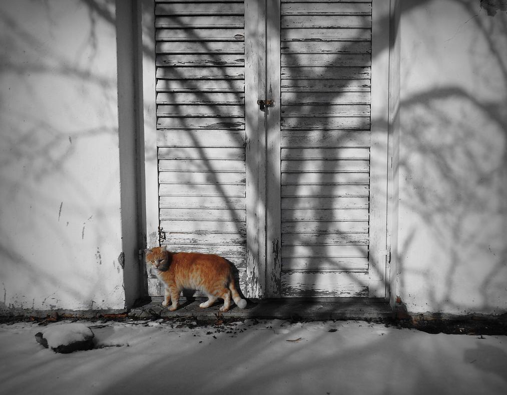 Please, anybody home?! by VesnaRa-14