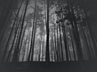 Winter fog in the forest II by VesnaRa014