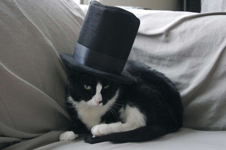 Fancy Cat by frisbii