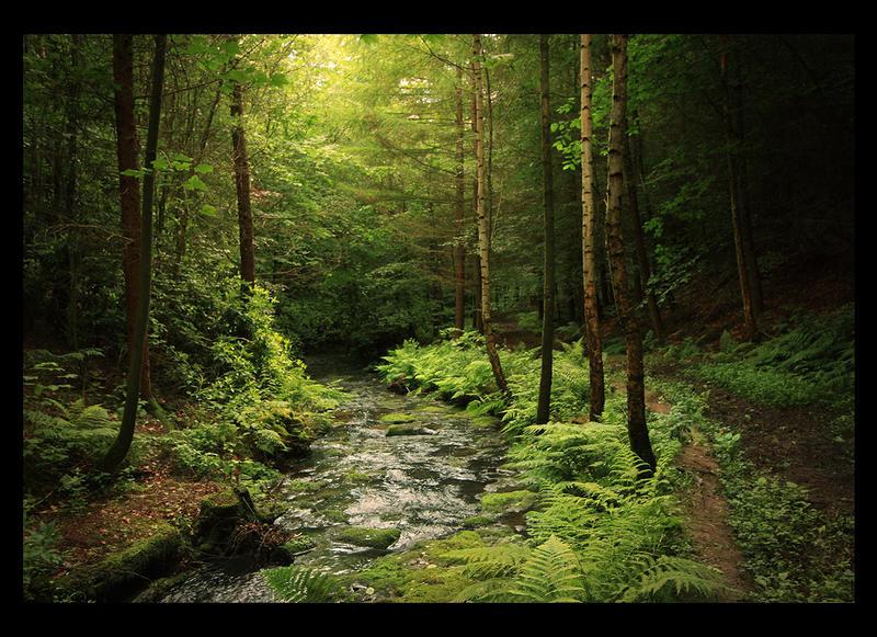 Loki's Forest