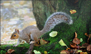 autumn habits by lucias-tears