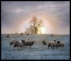 Winter Sun by lucias-tears