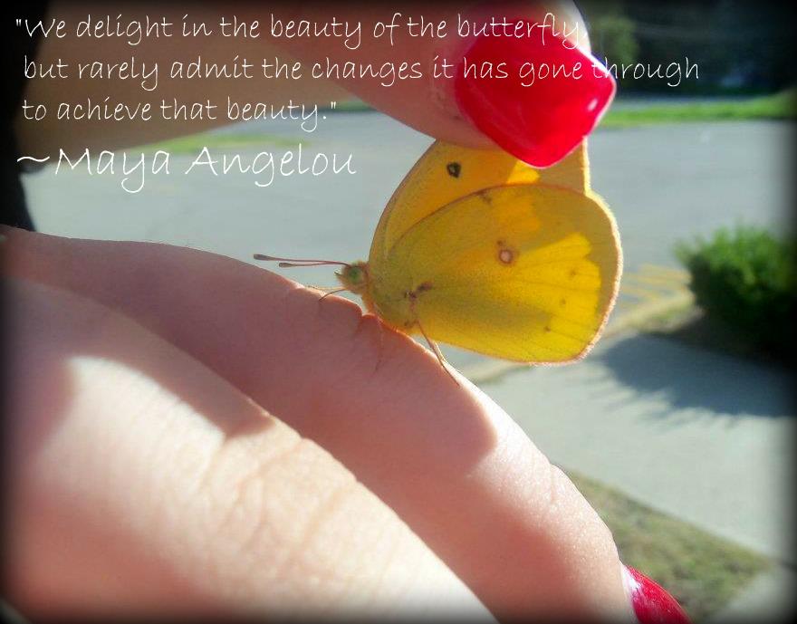 Butterfly by LaurelsARainbow