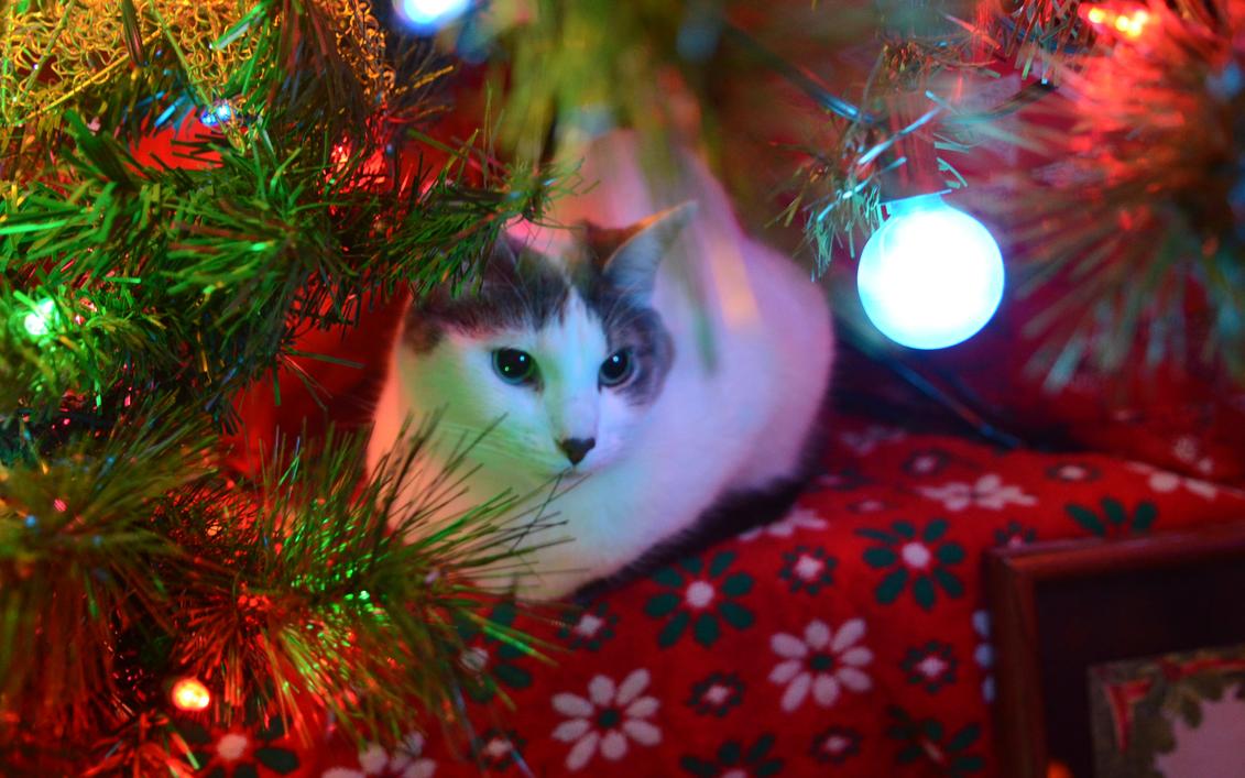 Quiet Night Under the Tree by firestorm037
