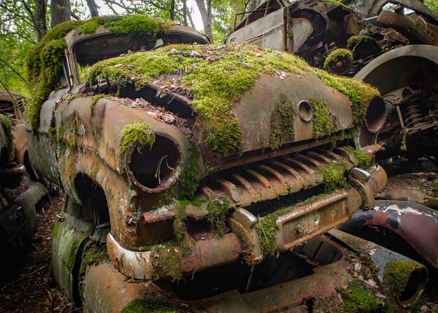 Mossmobile by birdesigns