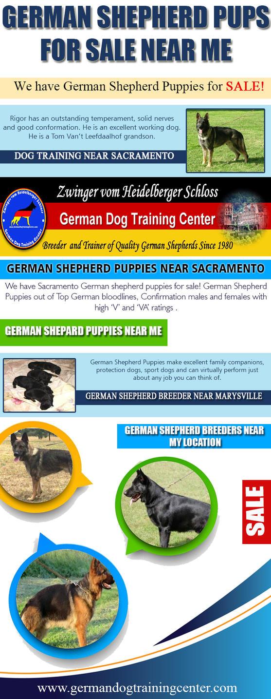 german shepherd pups for sale near me by puppiesnear on