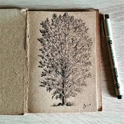 Black Poplar by StephanoAnt