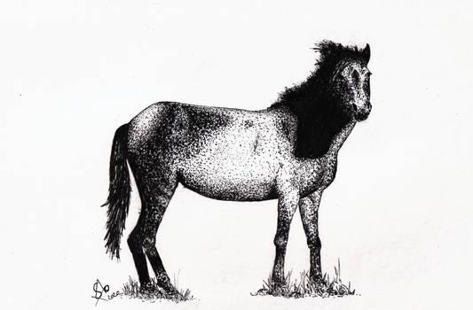 Horse - Giara - Baio