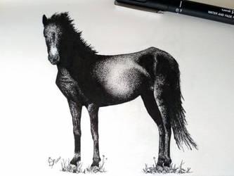 Horse - Giara - Morello