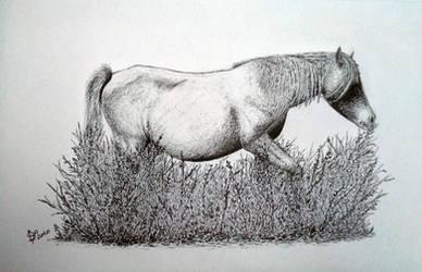 Horse - Giara - Sauro Bruciato