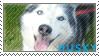 Husky Stamp by crabbyash