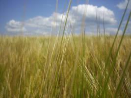 Grain one by IselGFX