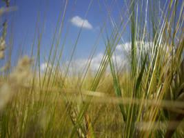 Grain Three by IselGFX