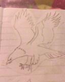 eagle by mor4674j