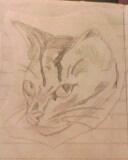 cute cat by mor4674j