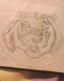 tiger head by mor4674j