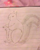 squirrle by mor4674j