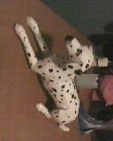 dalmatian by mor4674j