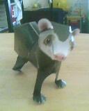 curious ferret by mor4674j