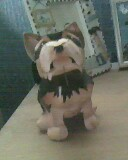 Yorkshire terrier by mor4674j