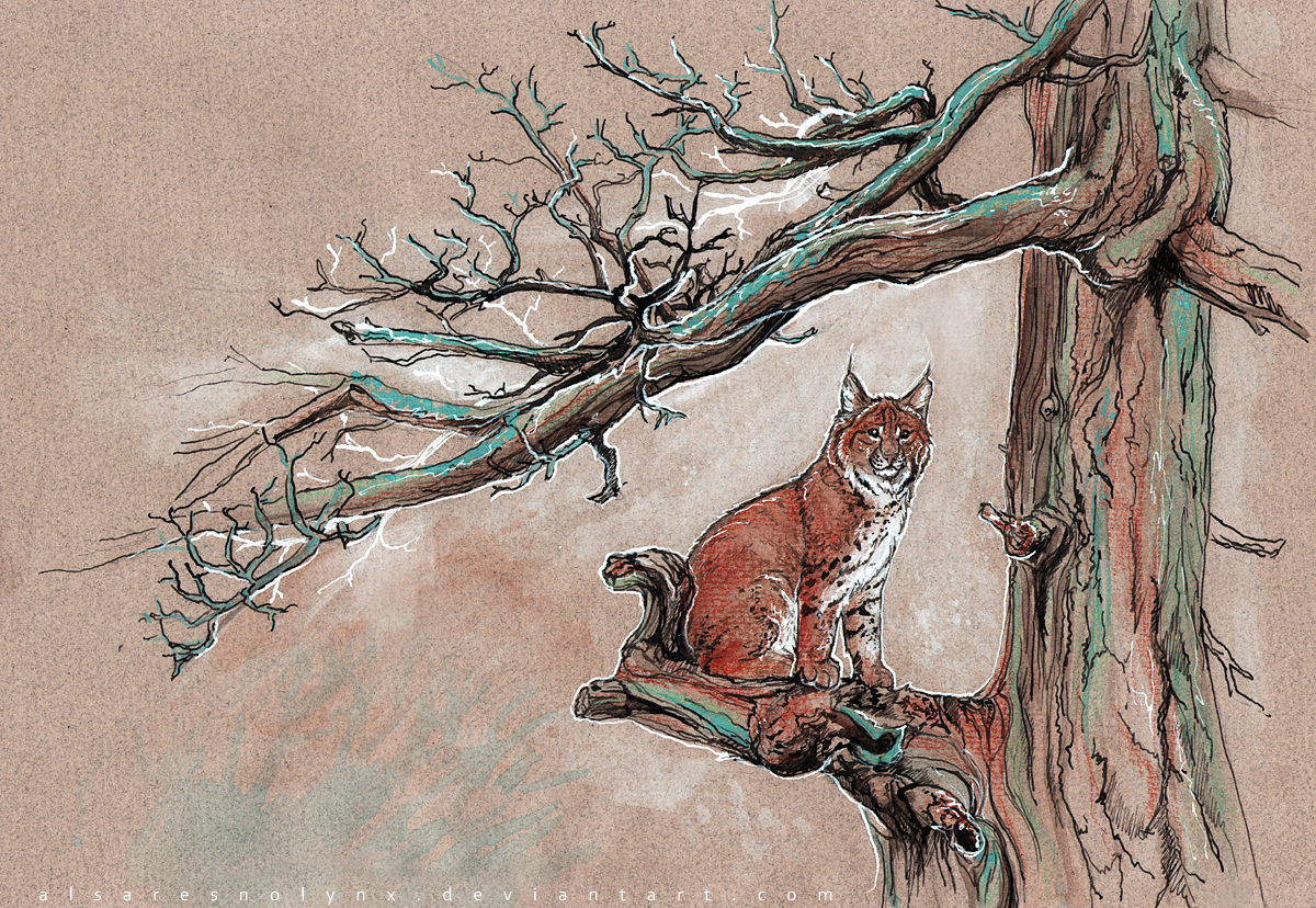 bobcat by AlsaresLynx
