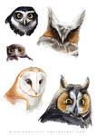Sketch dump - Owl