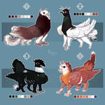 [Sold] Griffin pigeon Auctions