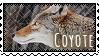 Stamp: Coyote by WrendingRae